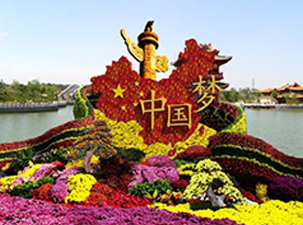 菊花展览及各种景观菊花工程设计施工
