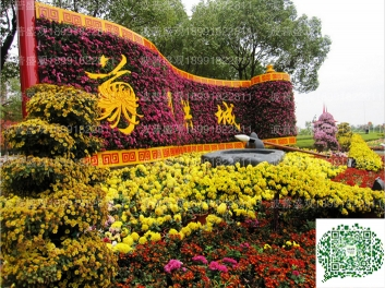 景区菊花展