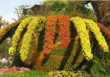 波普盛观菊花种植基地:景区菊花之悬岩菊