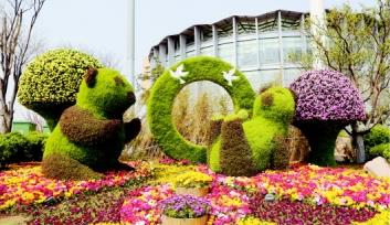 青岛崂山区绿雕