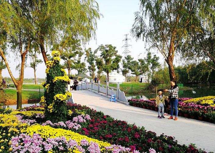 公园菊花展厂家
