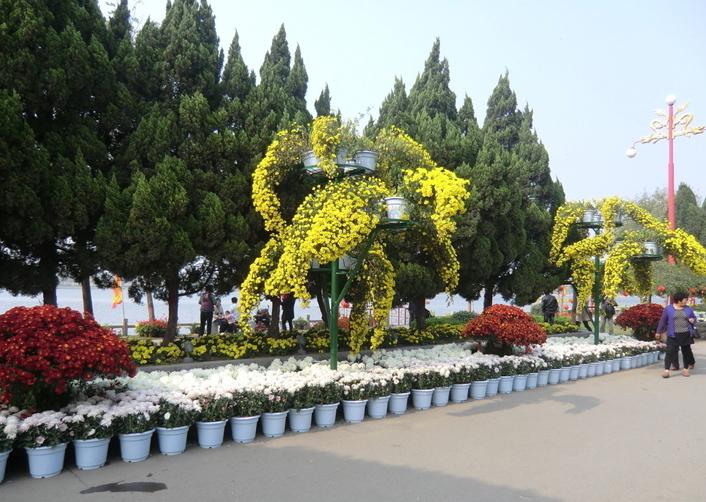 铜川景区菊花展