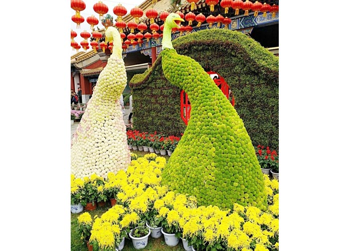 大型菊花展览