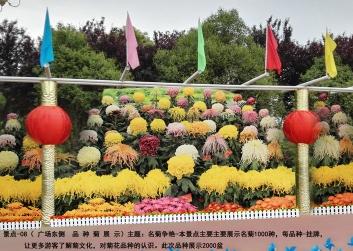 庆典五色草施工