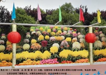 菊花展施工