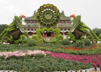 咸阳公园菊花展