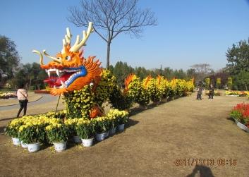 延安景区菊花展