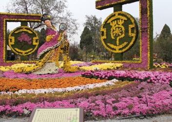 菊花展览公司