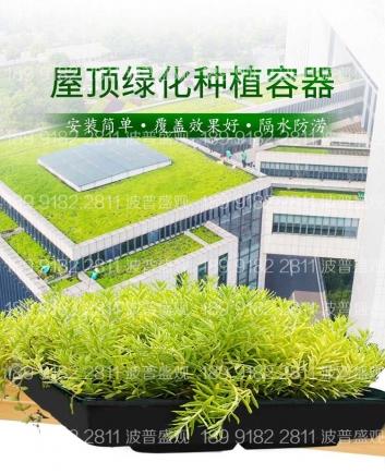 请问屋顶绿化佛甲草多少钱一平方?