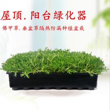 屋顶防晒隔热:就用经济、环保、快捷的容器式佛甲草