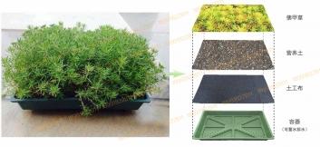 西安屋顶绿化佛甲草种植合作社